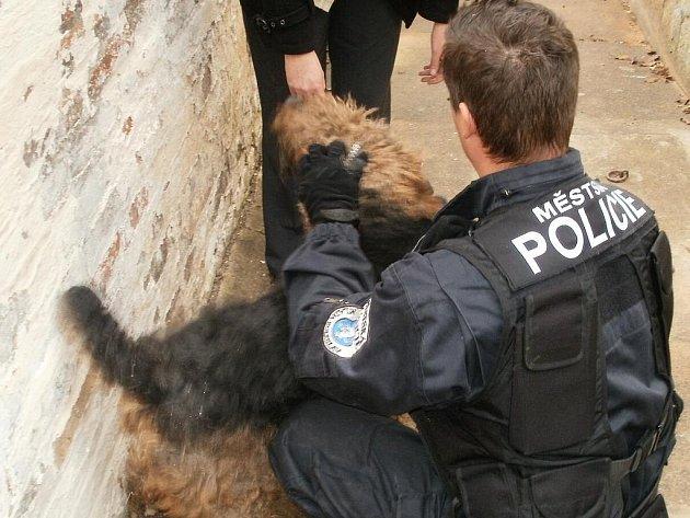 Pes se přes nadzvednuté tašky dostal až na střechu. Dolů ho museli sundat strážníci