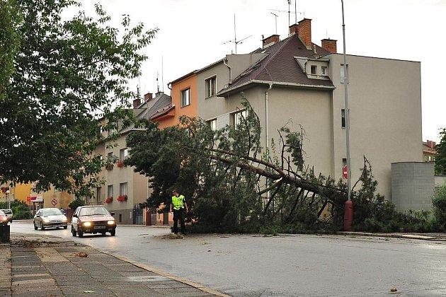 Vyvrácený strom v Havlíčkově ulici.