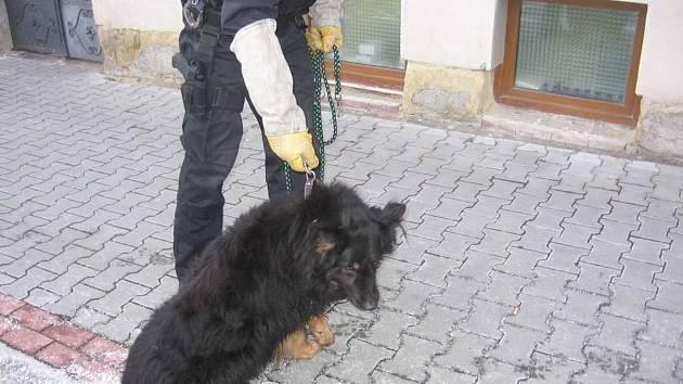 Odchyty psů jsou v Malé Boleslavi skoro na denním pořádku.