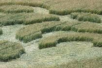 Kruhy v obilí nedaleko Dobrovice.
