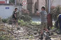 Kácení stromů na parkovišti na Komenského náměstí začalo, přestože stromy i keře se chystají na vykvetení a na stromech už mají nová hnízda ptáci. Radnice prý kácení udělila výjimku.