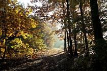 Ve farním lese může pomáhat kdokoli, kdo má potřebu nadýchat se čerstvého vzduchu
