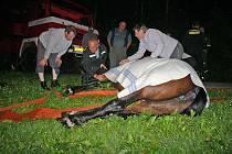 Záchrana koně, který spadl do potoka