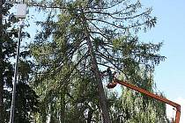 Pracovníci technických služeb odstraňovali poškozené větve ze vzrostlého stromu v centru Bělé pod Bezdězem.