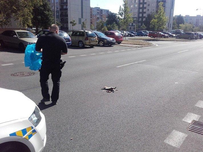 Mrtvý králík na ulici J. Palacha.