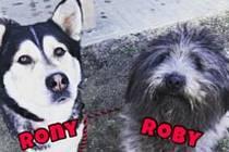 Roby a Rony hledají nový domov