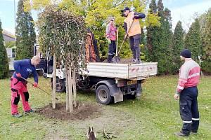 V Boleslavi byly v posledním týdnu vysazeny desítky nových stromů. Symbolicky se začalo se sázením na Den stromů, který připadá na 20. října.