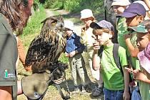 Děti si mohly pohladit i naší největší sovu - výra velkého.