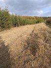 Díky aktivitě mladých ochránců přírody z Dolního Bousova se ohroženému hořečku na louce u Vlčího Pole opět daří.