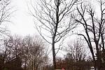 Sázení stromů ve Štěpánce