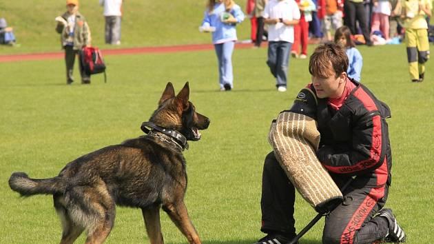 Ilustrační foto - služební policejní pes
