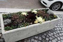 Lidé ničí stromy, ale také kradou květiny