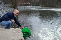 Rybářský hospodář Radek Zahrádka při vypouštění malých parem do Jizery.