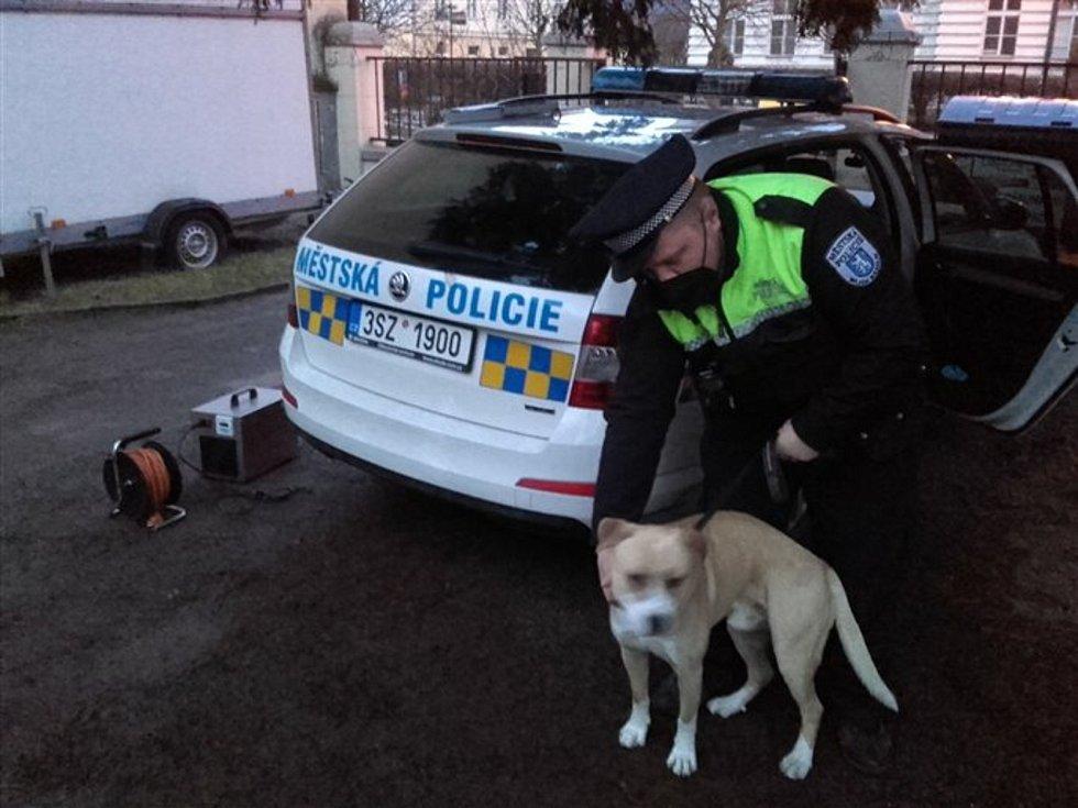 První klient nového psího útulku v Mladé Boleslavi je kříženec staforda