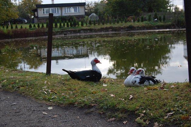 Z březinského rybníka a jeho okolí dýchá romantika.