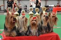 Klubová psí výstava teriérů ve výstavním areálu na Krásné louce.