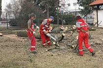 Nemocné stromy musely být pokáceny.