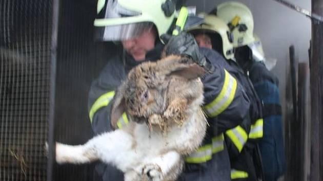 Hasiči zachraňují z ohně vyděšená zvířata