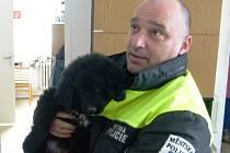 Nalezený pes v Mladé Boleslavi.