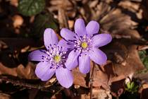 Květina č. 2.