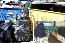 HYENISMUS. Malá koťata skončila v popelnici. Zachránila je žena, která je donesla na služebnu městské policie.