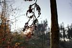 Podzimní krajina očima Gábiny Baborské