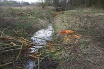 Nelegálně pokácené stromy u Bakova nad Jizerou.