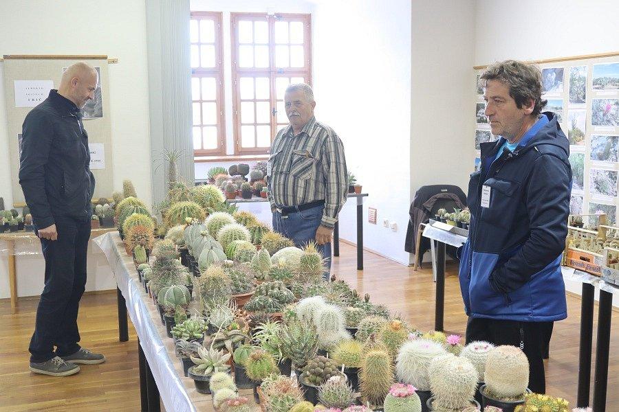 Výstava kaktusů.