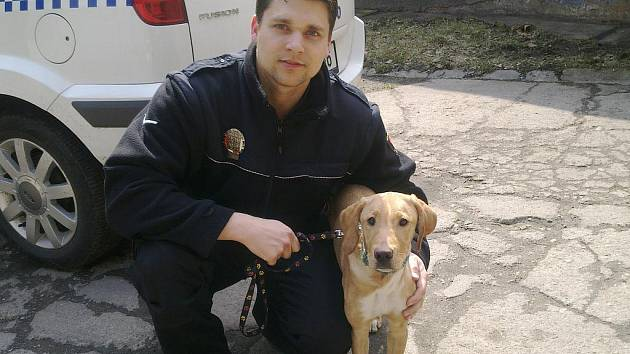 Uvázaného psa vysvobodili až strážníci Městské policie Bakov