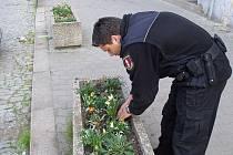 Strážníci museli vytrhané květiny znovu zasadit do květináčů.