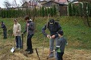 Sázení stromků v Čisté