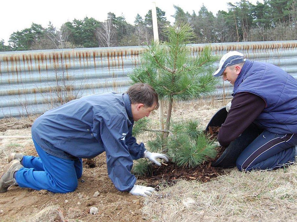 Sázení stromů v Čisté v rámci projektu Škoda Auto