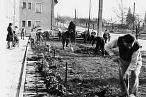 Úprava zeleně před činžovním domem č. 536. Rok 1959.