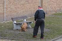 Agresivní pes na Slovance