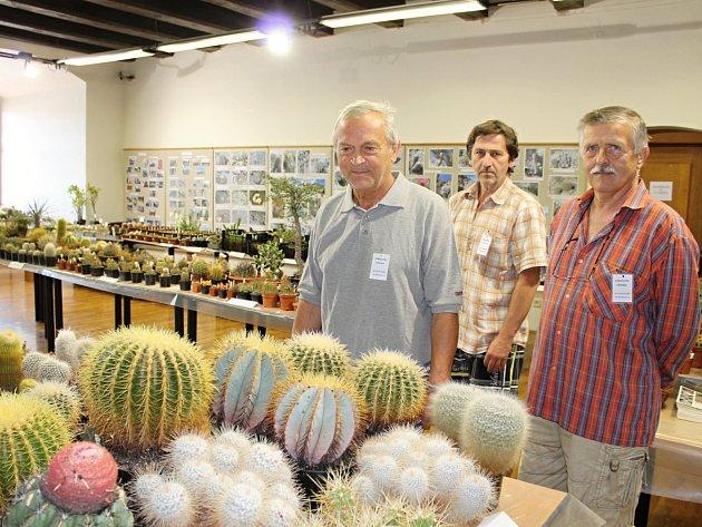 Výstava kaktusů je ve Státním okresním archivu přístupná až do neděle.