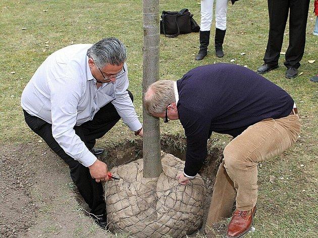 Primátor Mladé Boleslavi a ministr životního prostředí vysadili v Mladé Boleslavi nové stromy.