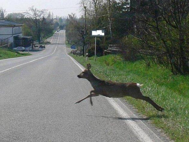 Je to rychlost! Někdy se to vážně vidět nedá...