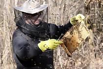 Jaro se na včelnicích nese ve znamení kontroly.