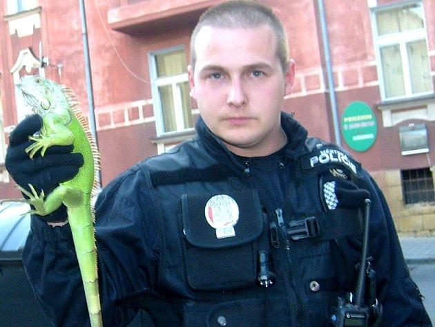 Zelený leguán, kterého museli chytit strážníci městské policie