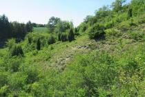 Jalovec u Kochánek dostane mimořádnou ochranu.
