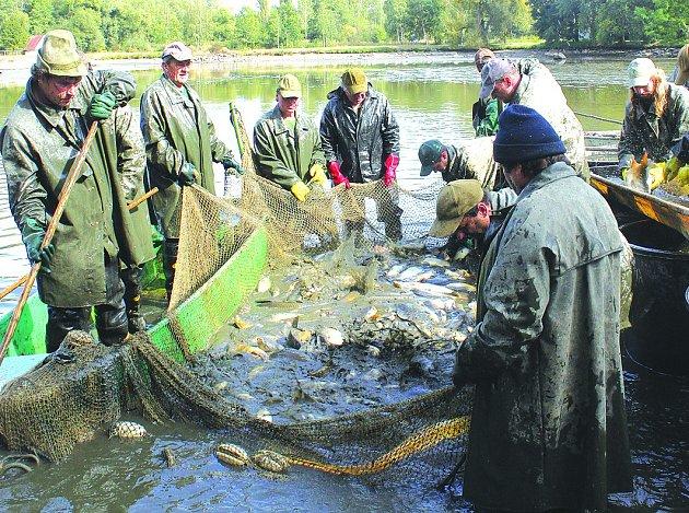 Středočeští rybáři při jednom z výlovů