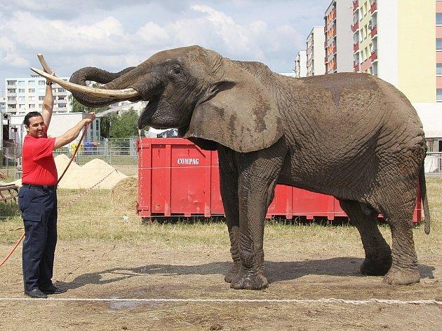 Zákulisí cirkus Medrano v Mladé Boleslavi