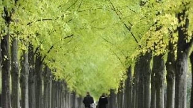 V Benátkách vznikne park za milióny