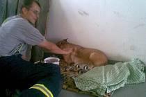 Zraněný pes po nehodě utekl, nakonec vše dopadlo dobře.