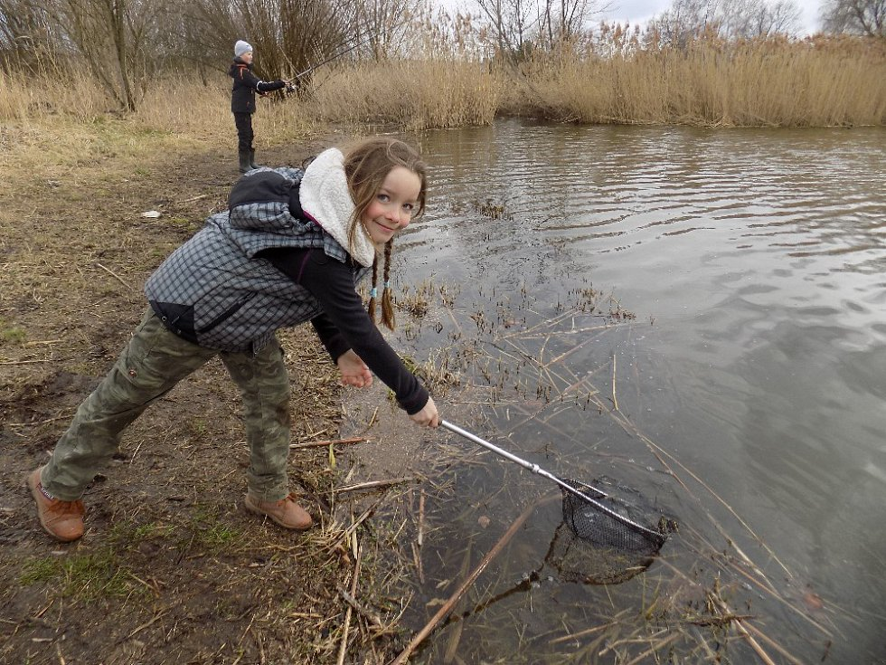 PATNÁCT MALÝCH rybářů z mladoboleslavských kroužků vyrazilo na první výlov pstruhů, který se uskutečnil na rybníku ve Smilovicích.