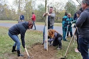 Z výsadby stromů ve Sportovně-rekreačním areálu Vrchbělá u Bělé pod Bezdězem.