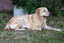 Psí nalezenec čeká na své majitele.