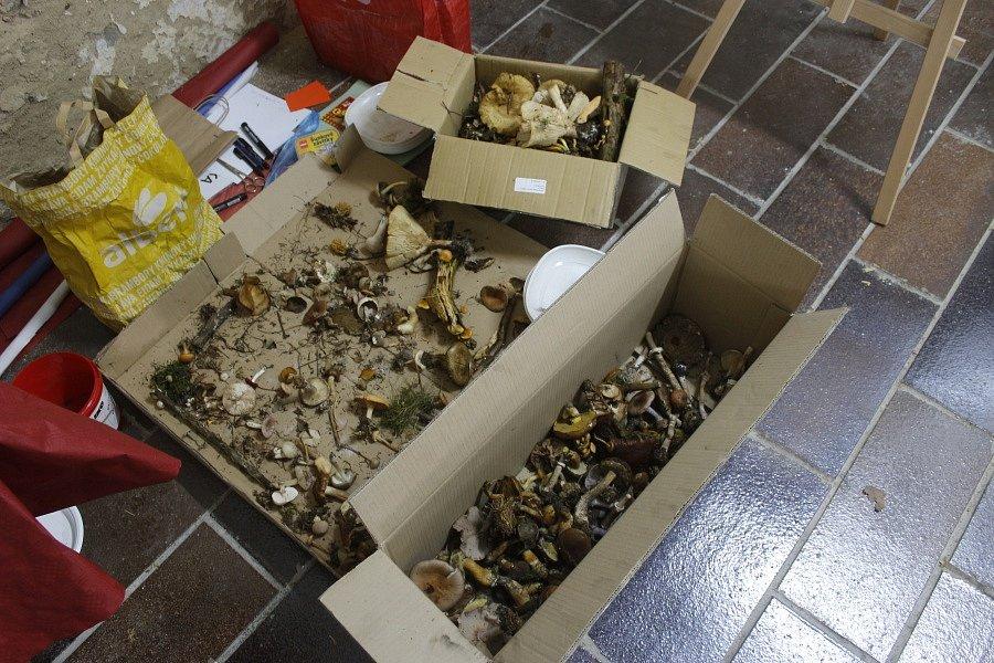 Výstava hub potěšila všechny houbaře.