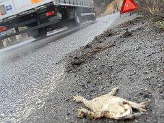 Mrtvým žábám u Dolní Krupé je naštěstí konec.
