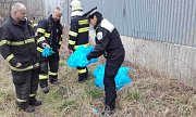 Policisté v Boleslavi našli sedm mrtvých nutrií